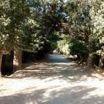 خیابان درختی لشگراباد