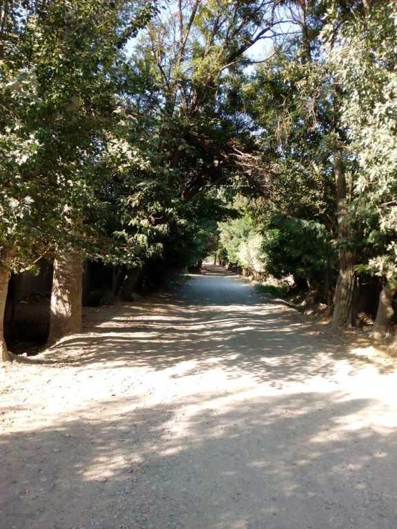 خیابان درختی لشکرآباد