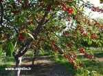 باغ چهاردیواری لشکرآباد