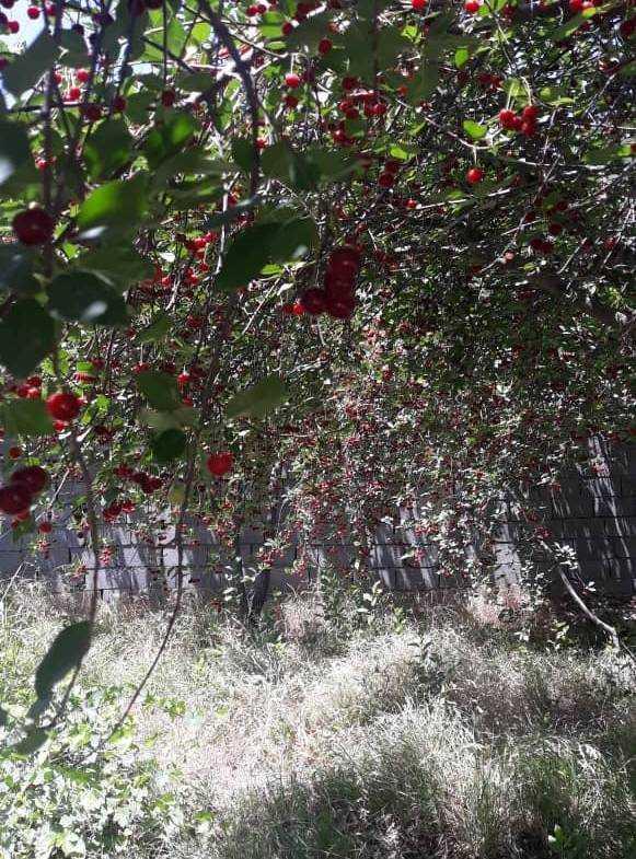 باغچه زیبا در سهیلیه